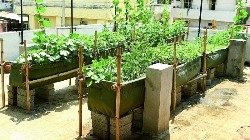 Myfarm Roof Top Vegetable Garden A Start Up In Agriculture Promoted By Ksidc Ltd Govt Make A Terrace In 2020 Terraced Vegetable Garden Vegetable Garden Terrace Garden