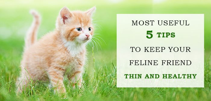 Tips To Keep Your Cat Lean And Healthy Cat Care Feline Healthy