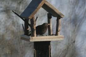 Bilderesultat for fuglebrett