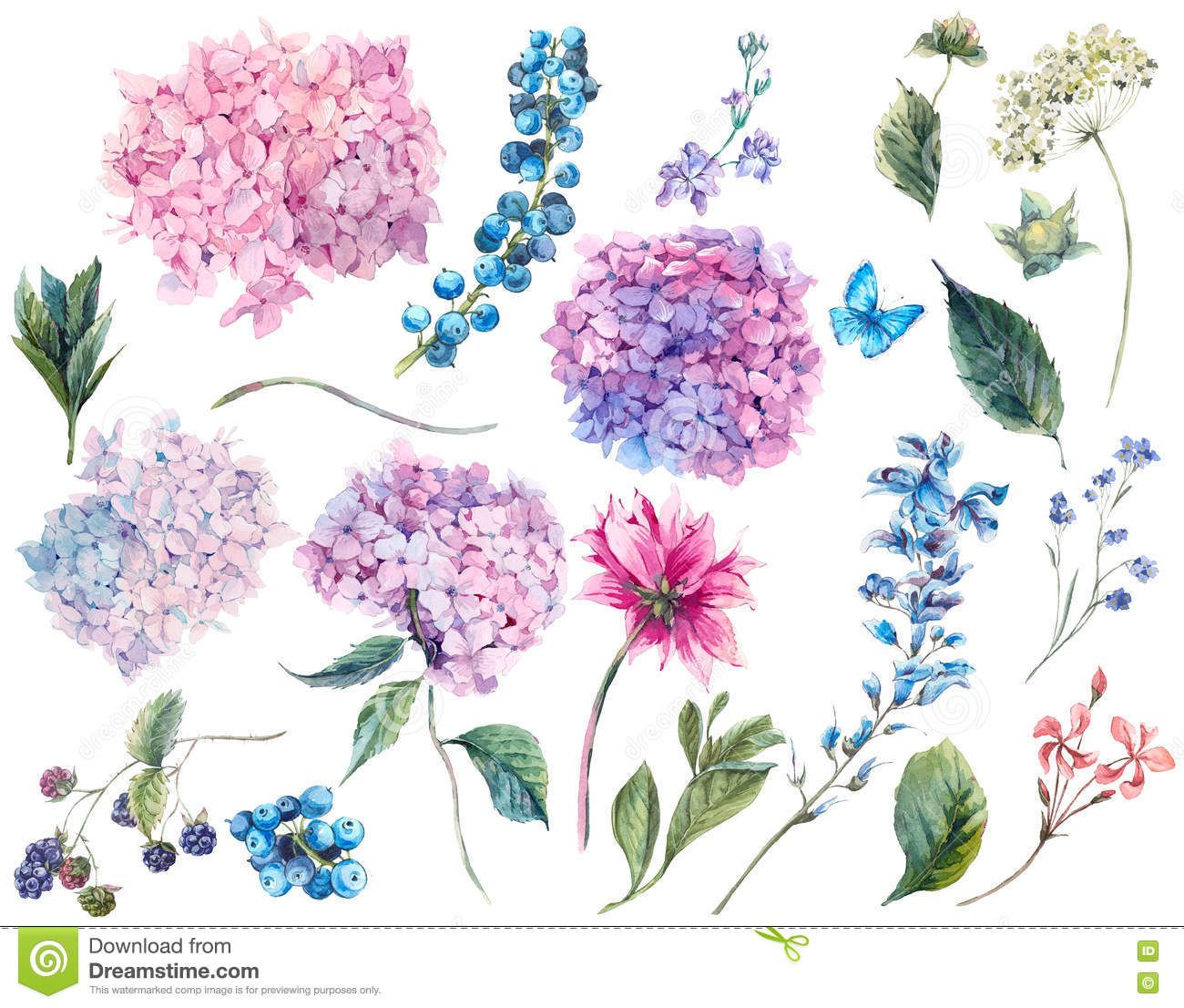 Set Vintage Watercolor Elements Of Hydrangea Stock Photo Image Of Branch Nature 73695310 Hydrangea Tattoo Small Flower Tattoos Flower Tattoos