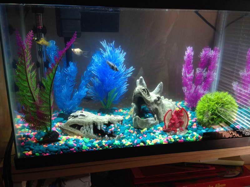 Fish Tank Setup Cool Fish Tanks Aquarium Fish Fish Tank