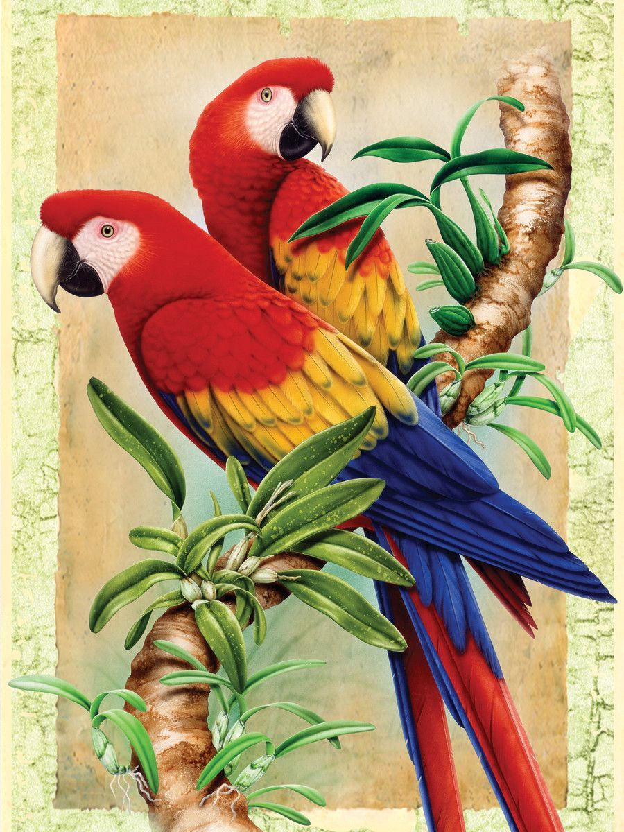 Painting by Numbers Junior Small Bamboo Parrot Set (Set of ...