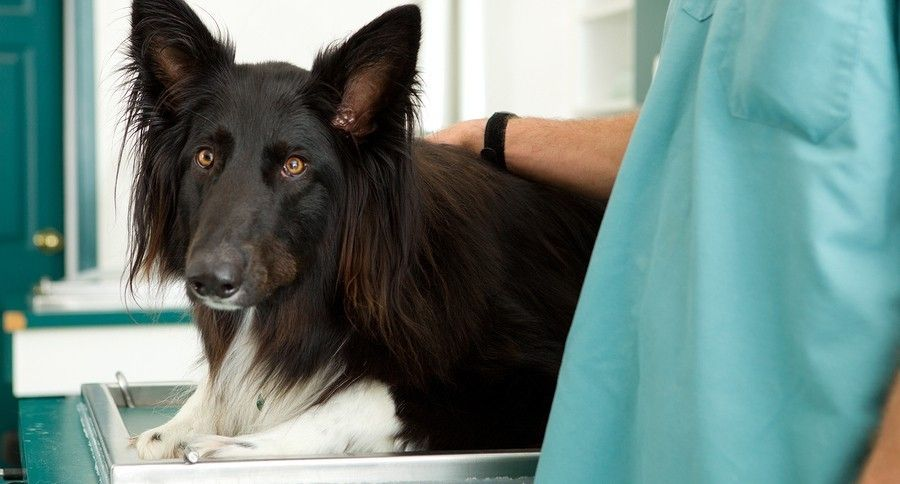 Pros And Cons Of Spaying And Neutering Your Pet Dogs Vet Clinics Dog Insurance