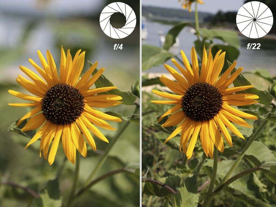 Depth of Field | Depth of field photography
