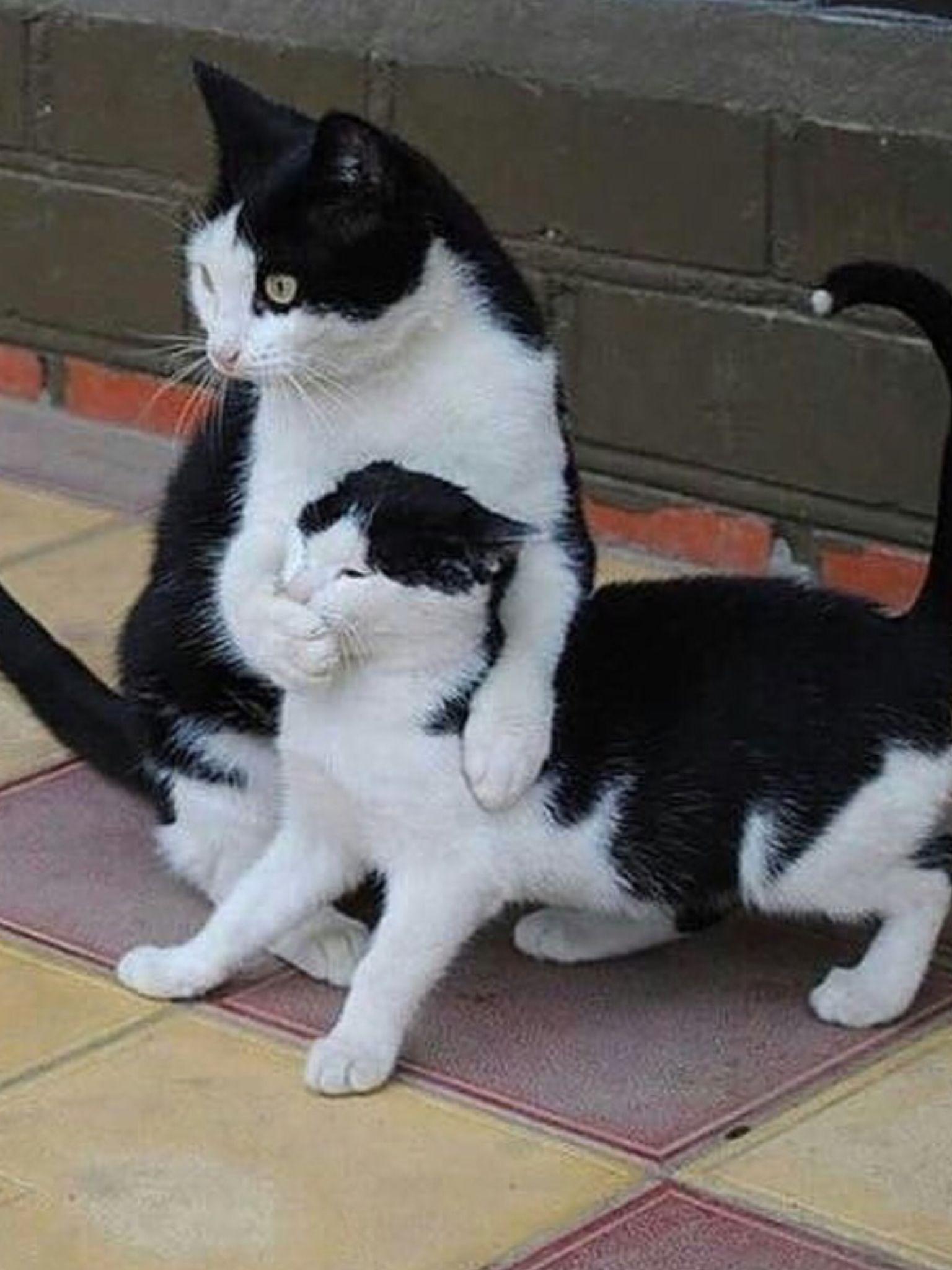 Sssssshhhhhhhhhhhhhhhhhhhhhhh It Is Coming Baby Cats Cute Baby Cats Cute Cats