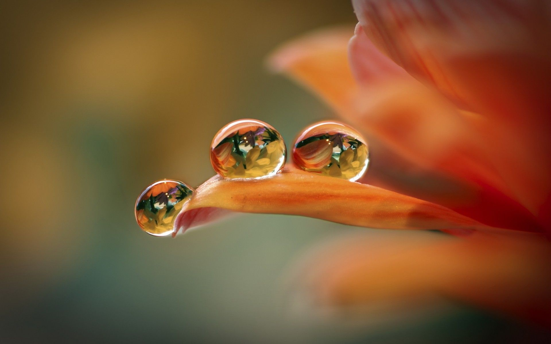 Flowers Droplets Wallpapers HD Pictures One HD Wallpaper 19201200