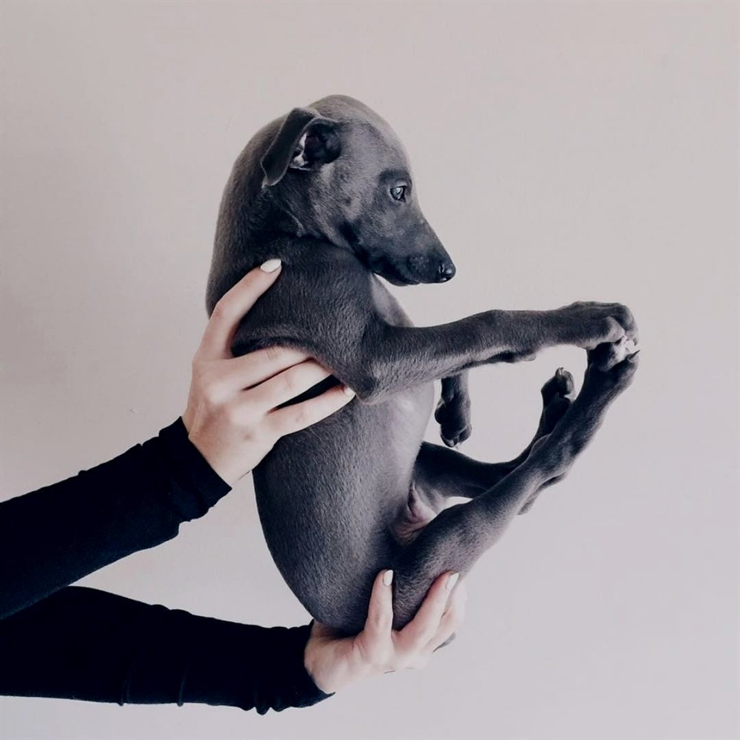 """Whippet on Instagram """"All these flashbacks make me want"""