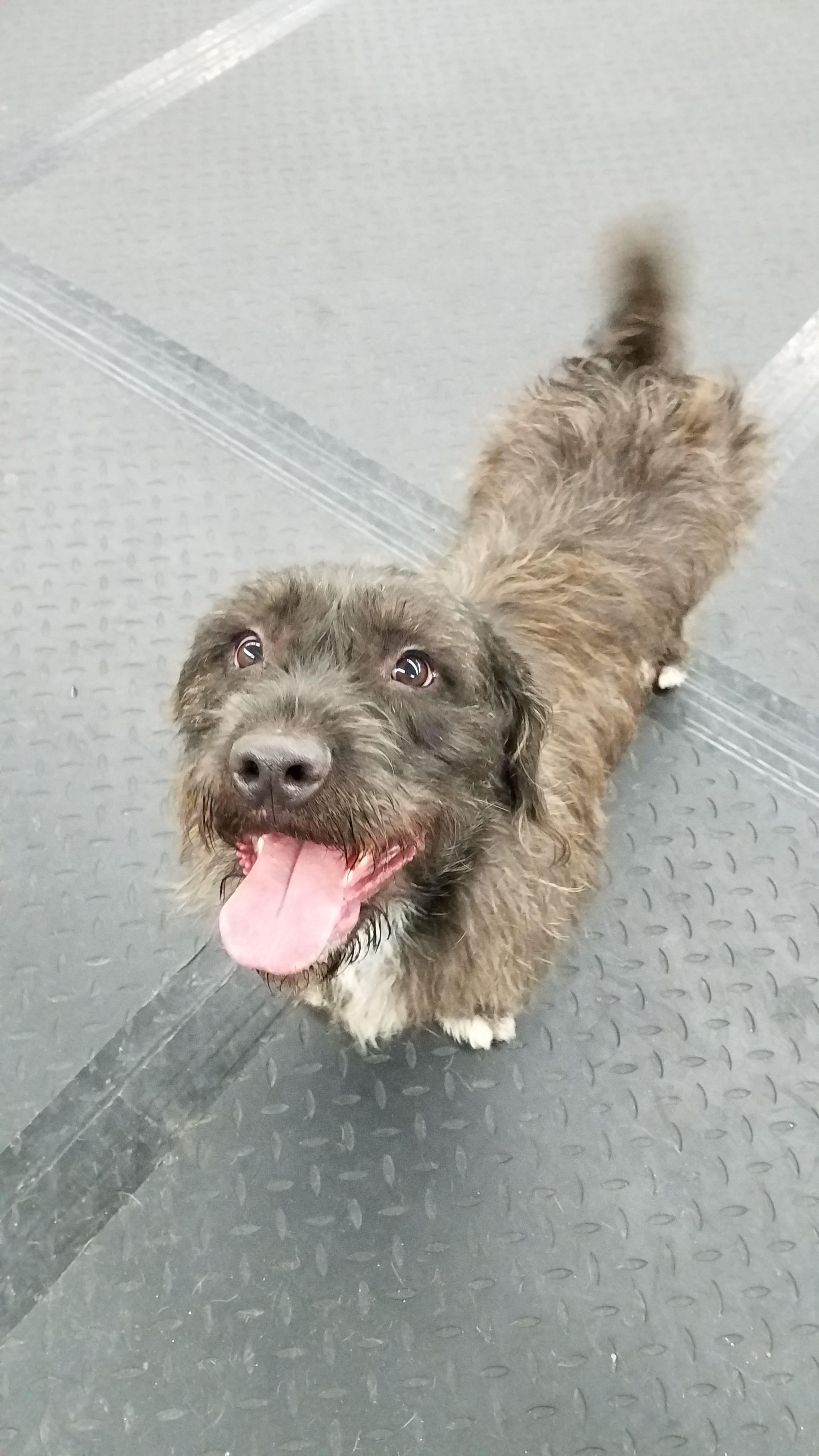 Adopt Wilbur on Petfinder Terrier mix dogs, Animal