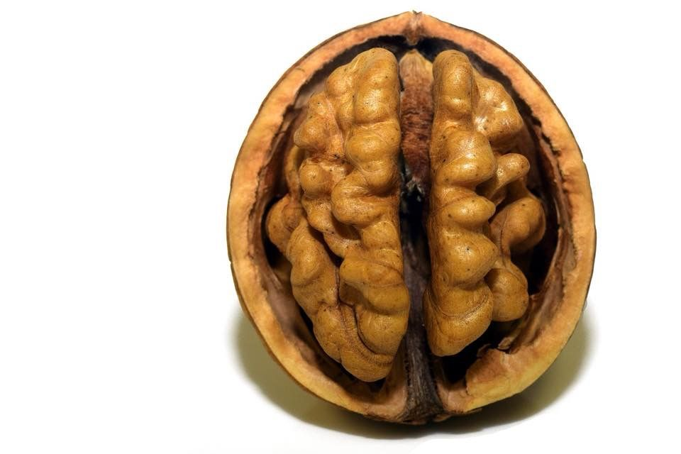 Walnuts are high in protein, iron and contain omega 3 fatty acids. They can reduce inflammation and pain, lubricate the lungs and intestines, and nourish the brain and adrenal glands.  #walnuts #brainfood #protein #iron #omega3 #inflammation #lungs #intestines #adrenalglands #guthealth #weightloss #healthy #healthyfood #nuts #nutrition #rawfood #rawvegan #vegan #vegetarian #plantbased #wellnesscoachcarolynakens  #brain #walnutsnutrition
