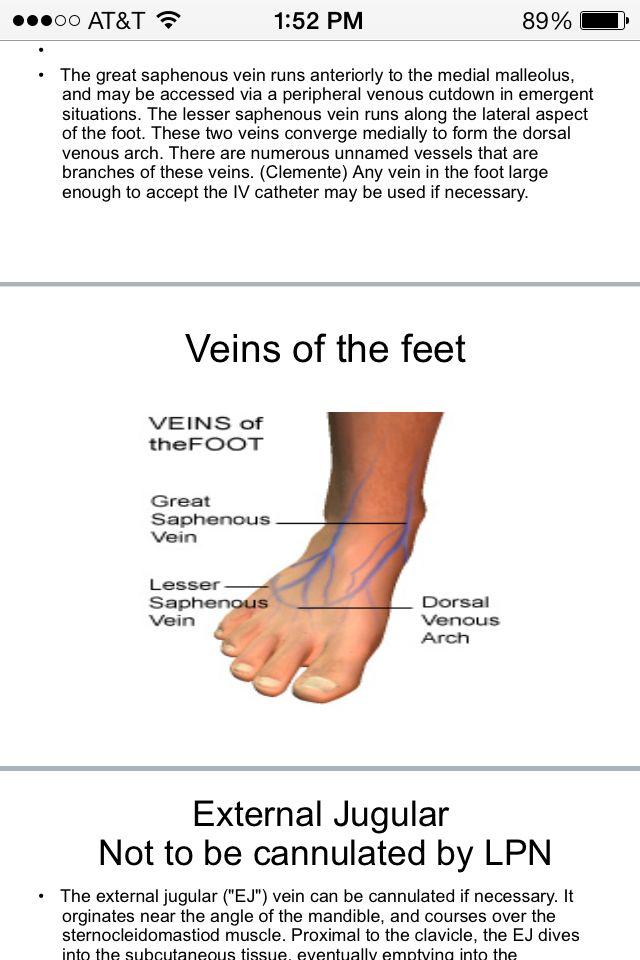 Fine Foot Veins Illustration Anatomy Ideas Yunokifo