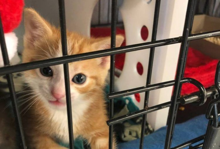 59 Cats Rescued From Filthy Hotel Room by Idaho Humane