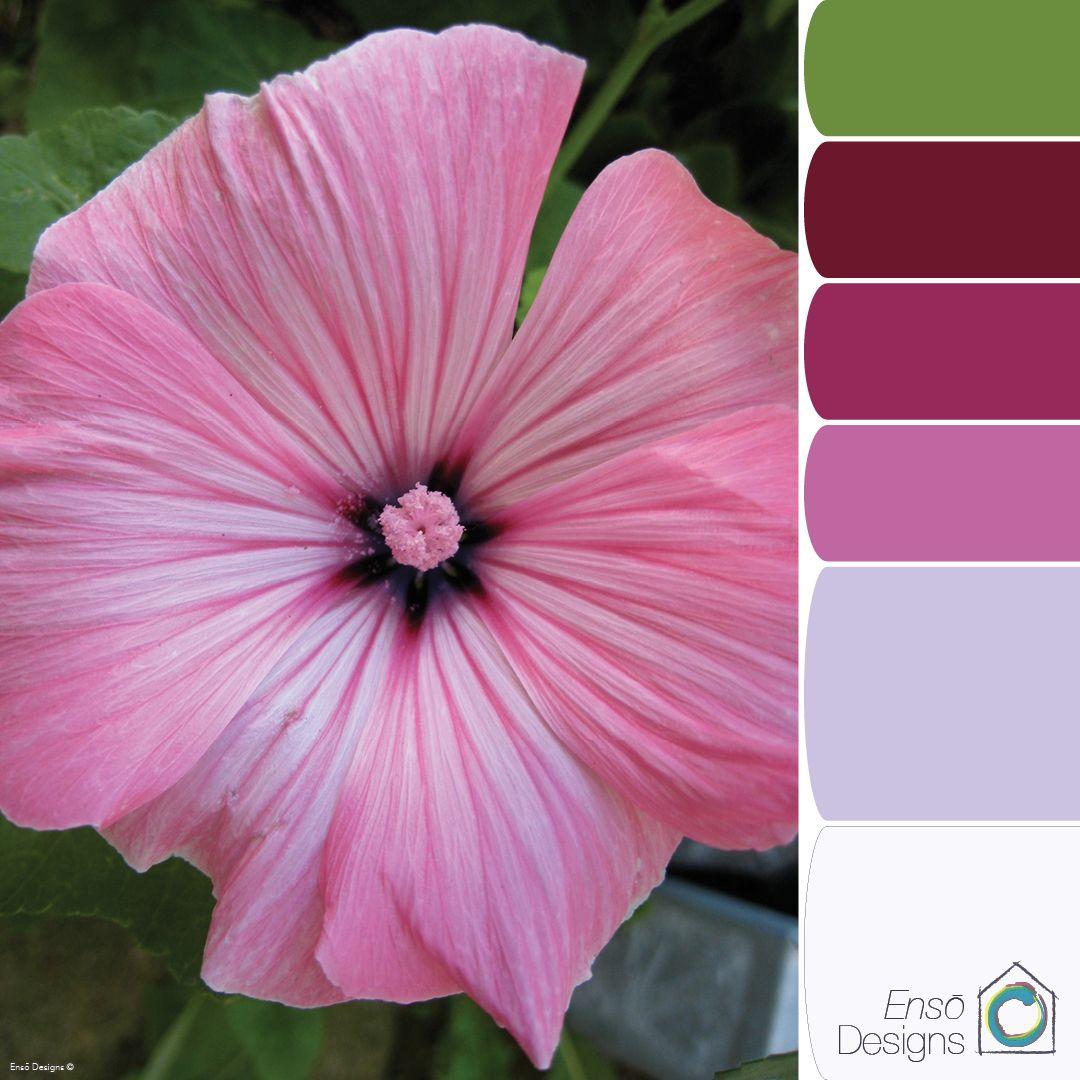 Colour Palette Pink Hollyhock by Ensō Designs | 8 Colors | Pinterest