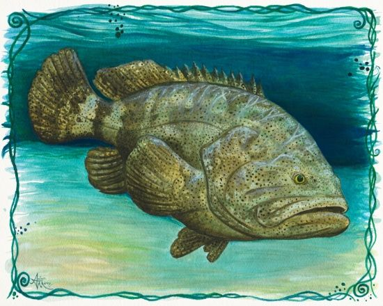 Amber Marine Gallery Goliath Grouper Watercolor Painting
