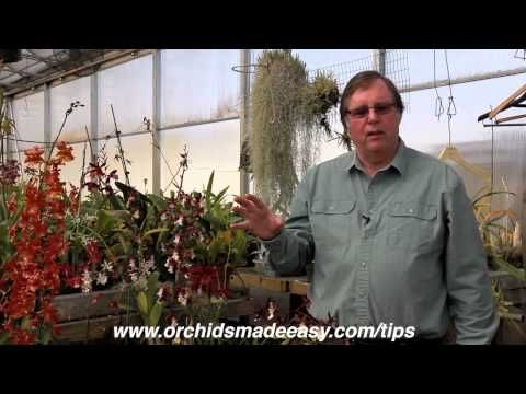 "▶ ""Care of Orchids"" 
