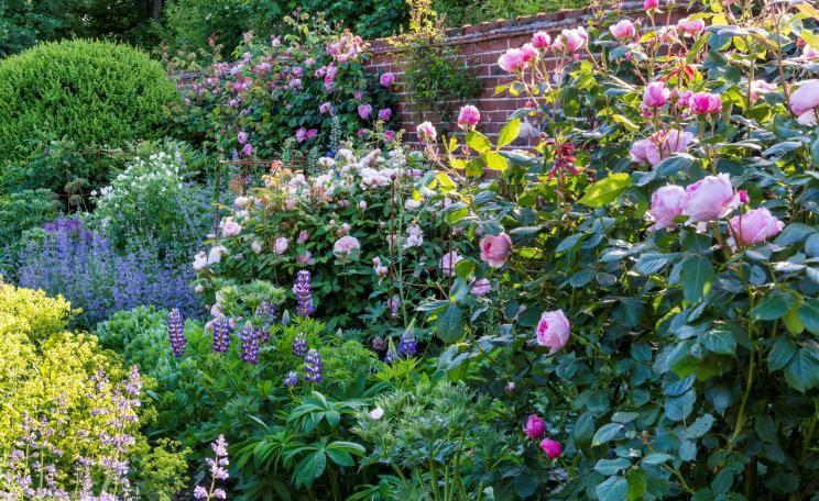 Rosenbegleiter Die schönsten Partner Gardens