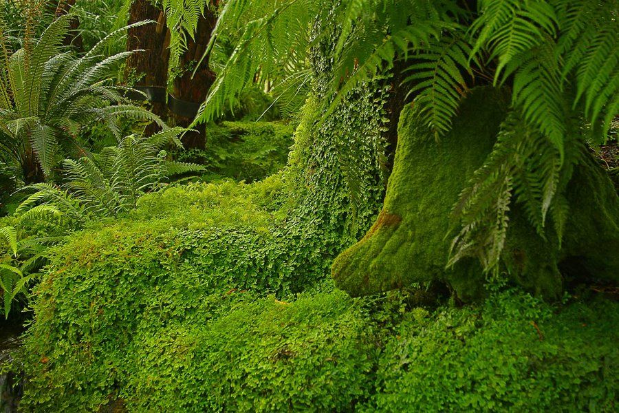 Life is Green by ~Michel Lalonde on deviantART