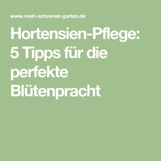 hortensien pflege 5 tipps f r die perfekte bl tenpracht pinterest hortensien pflege. Black Bedroom Furniture Sets. Home Design Ideas