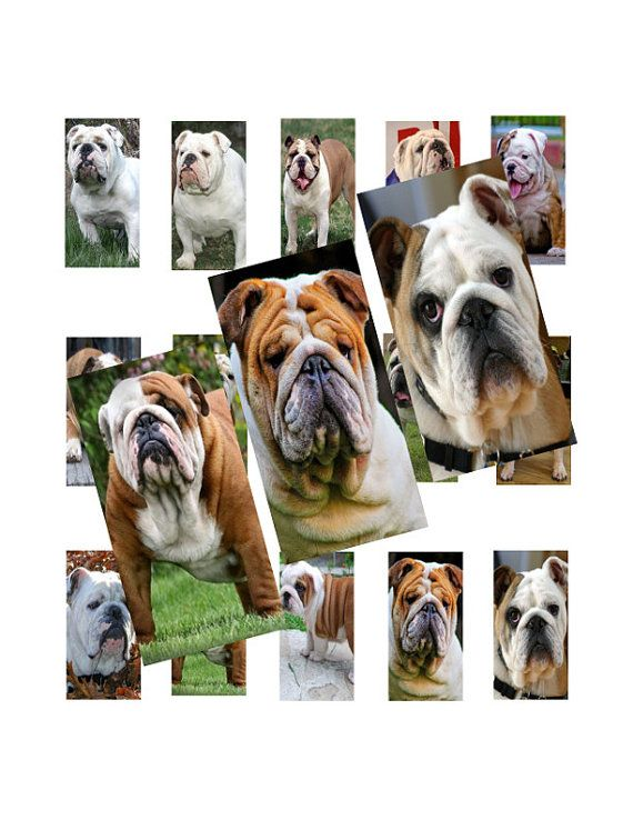 Bulldogs 1x2inch Domino Images Digital Collage by LisaChristines, $1.50
