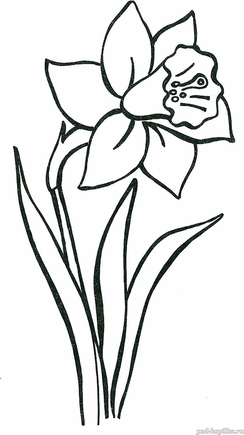 Pin By J Gora On Zumbul In 2020 Flower Drawing Embroidery Flowers Pattern Diy Embroidery Flowers