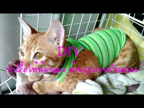 How To Sew A Dog Clothes ฝ กเย บช ดน องหมา Ep 1 Youtube แมว
