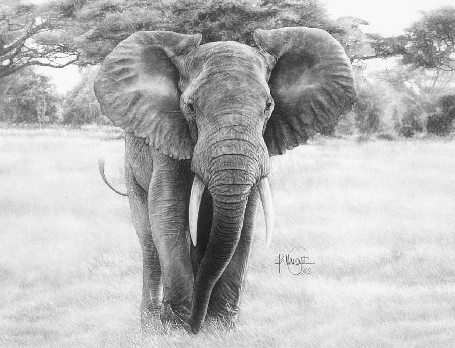 Bull elephant drawings for sale