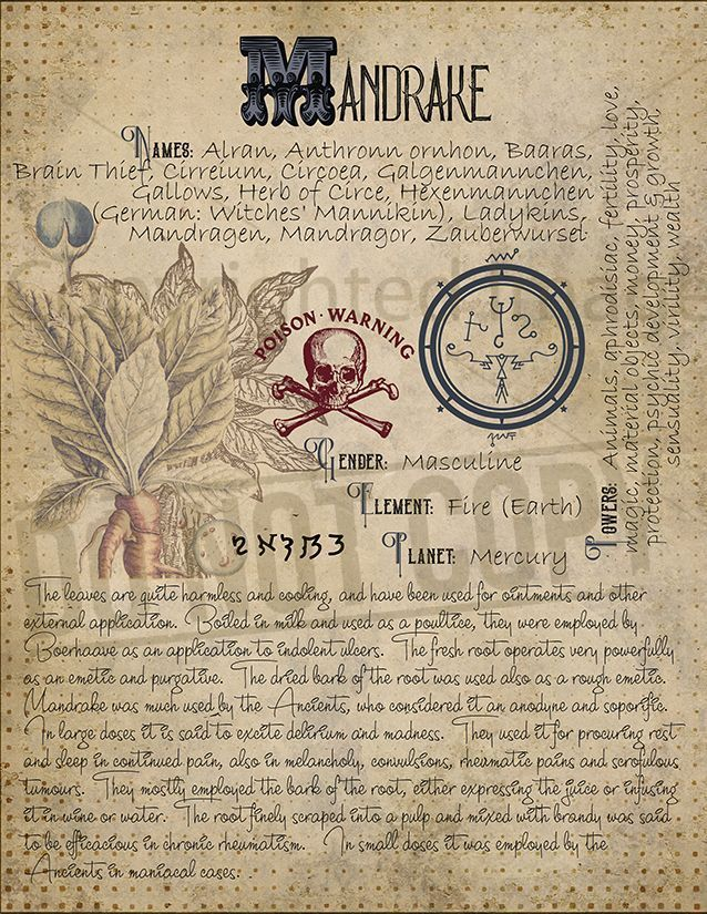 Magic plant knowledge has a long history and has a place in the modern witches Book of Shadows. Book of Shadows page. #modernwitch