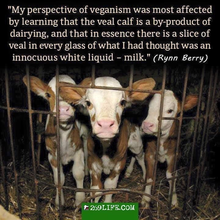 Fuel your compassion make money being vegan httpwww