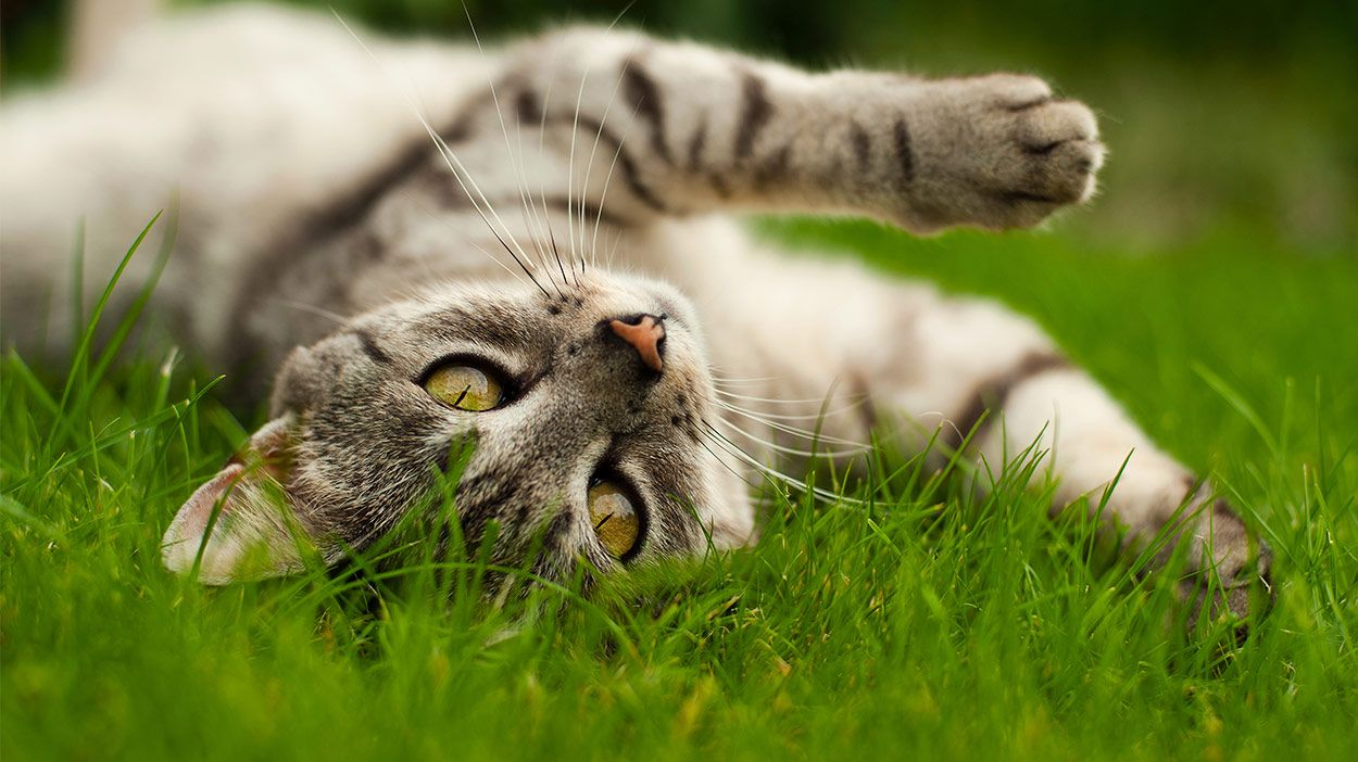 Diatomaceous Earth For Cats What Is It And What Can It