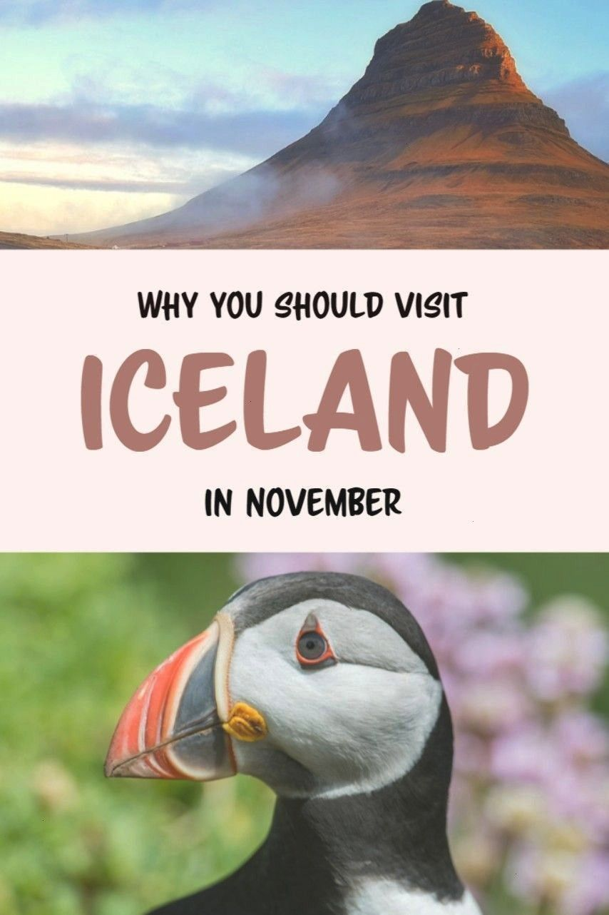Consider visiting Iceland in winter. Iceland in November is especially beautiful, with the northern
