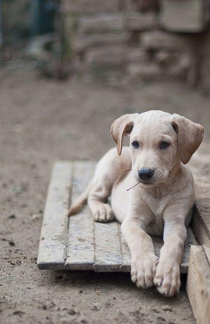 Animals おしゃれまとめの人気アイデア Pinterest Gregorietta Florena 可愛いワンちゃん ペット 犬 子犬 かわいい