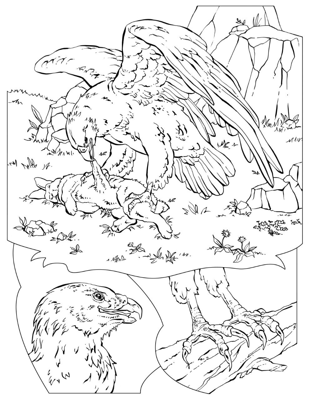 Coloring Book Animals A To I Coloring Books Coloring Pages