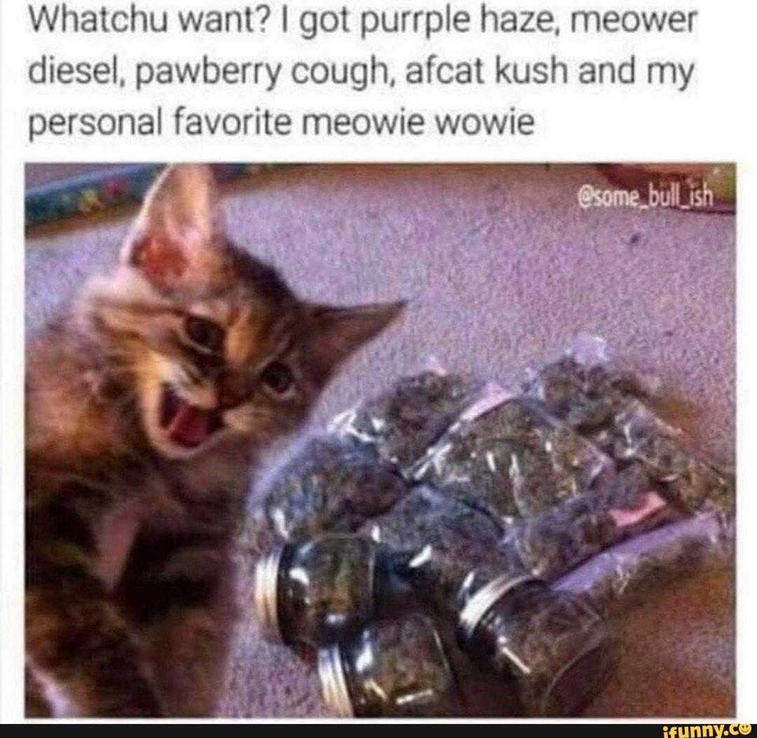 Whatchu want? I got purrple haze, meower diesel. pawberry
