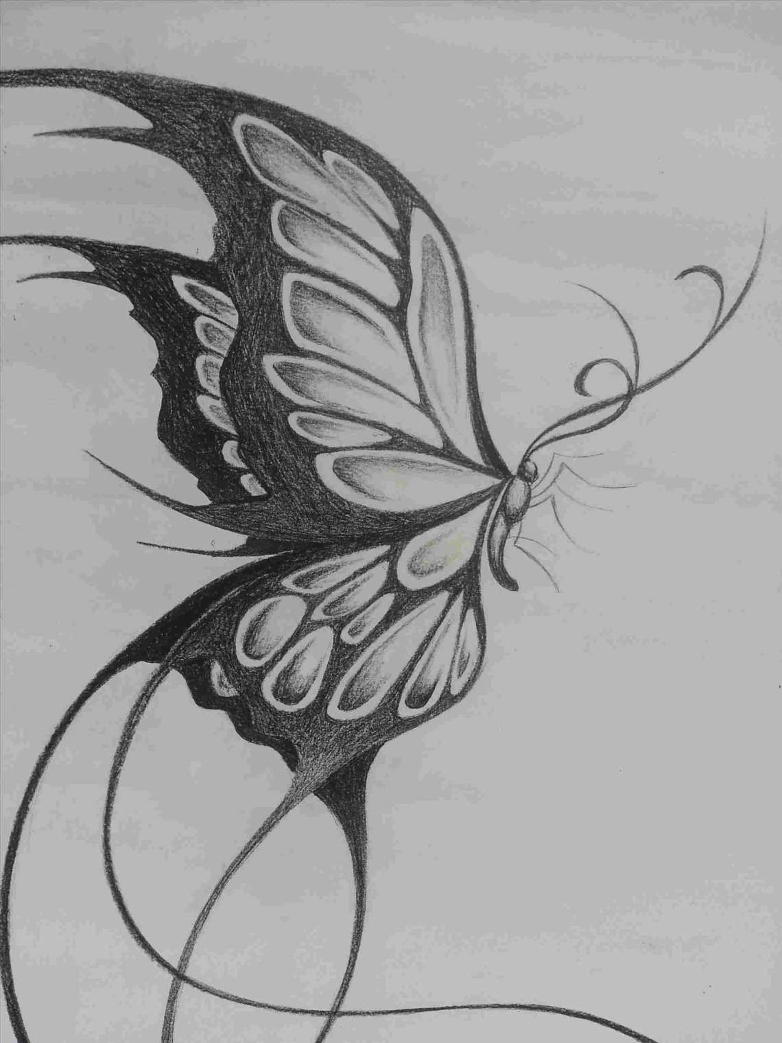 Pencil Drawing Of A Butterfly And Realistic Butterfly Drawing At