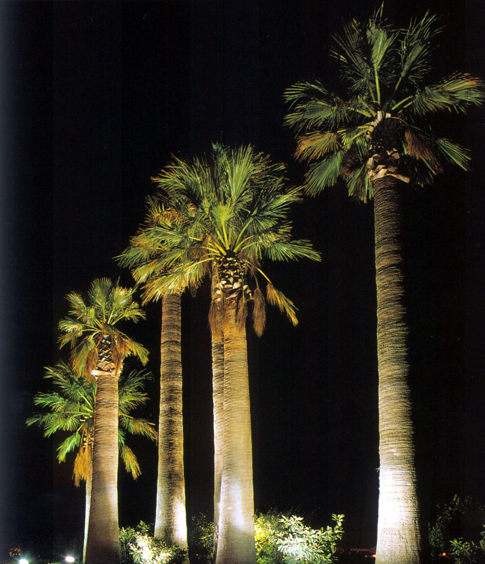 Palm tree uplight exterior lighting spaces Pinterest