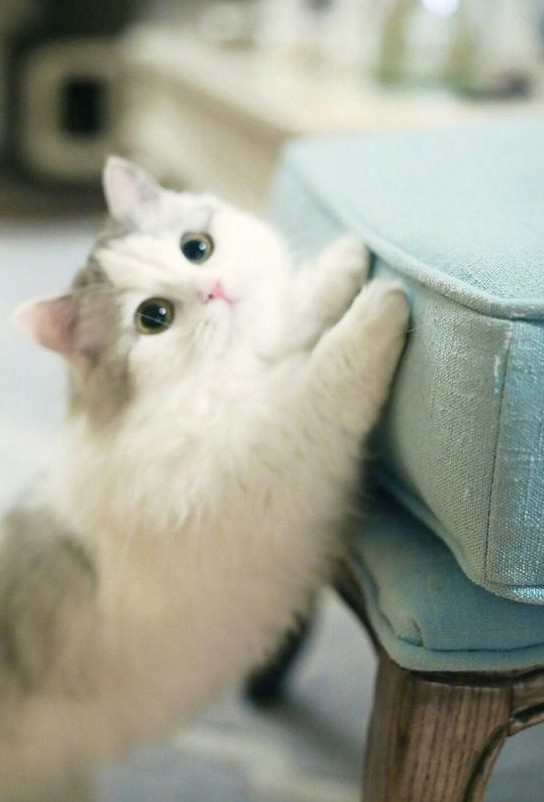 35 Cute Cat Pictures To Warm Your Heart With Images Funny Cat Photos Cat Pics Cute Hamsters