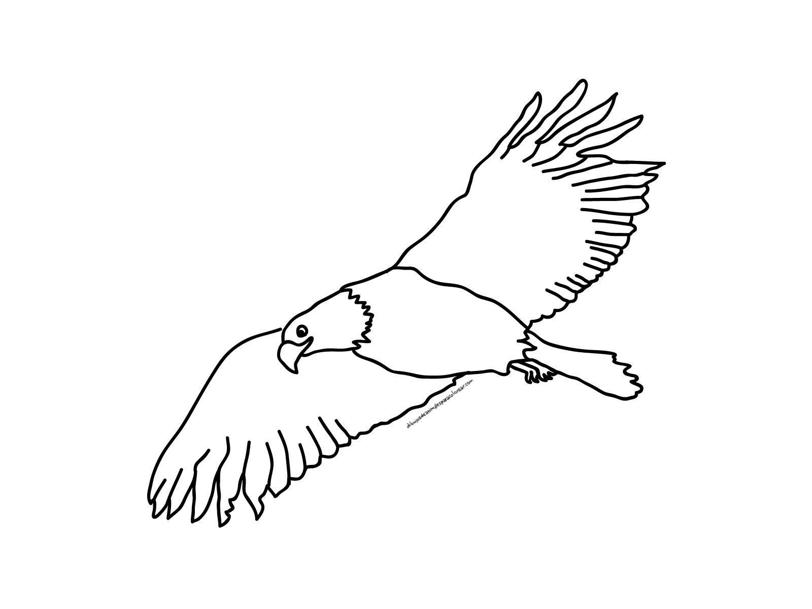 Hermosa águila Volando Para Colorear Festooning - Dibujos Para ...