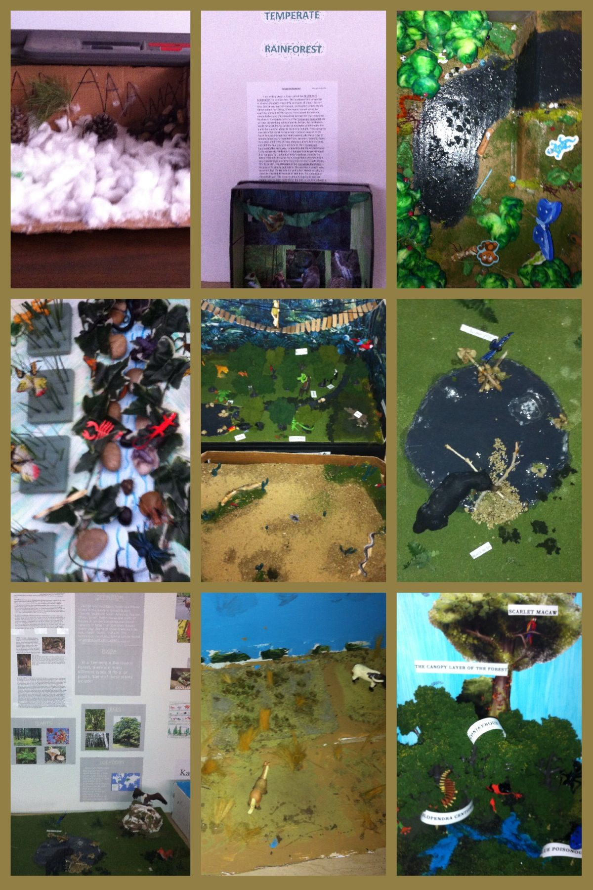 More Biome Projects