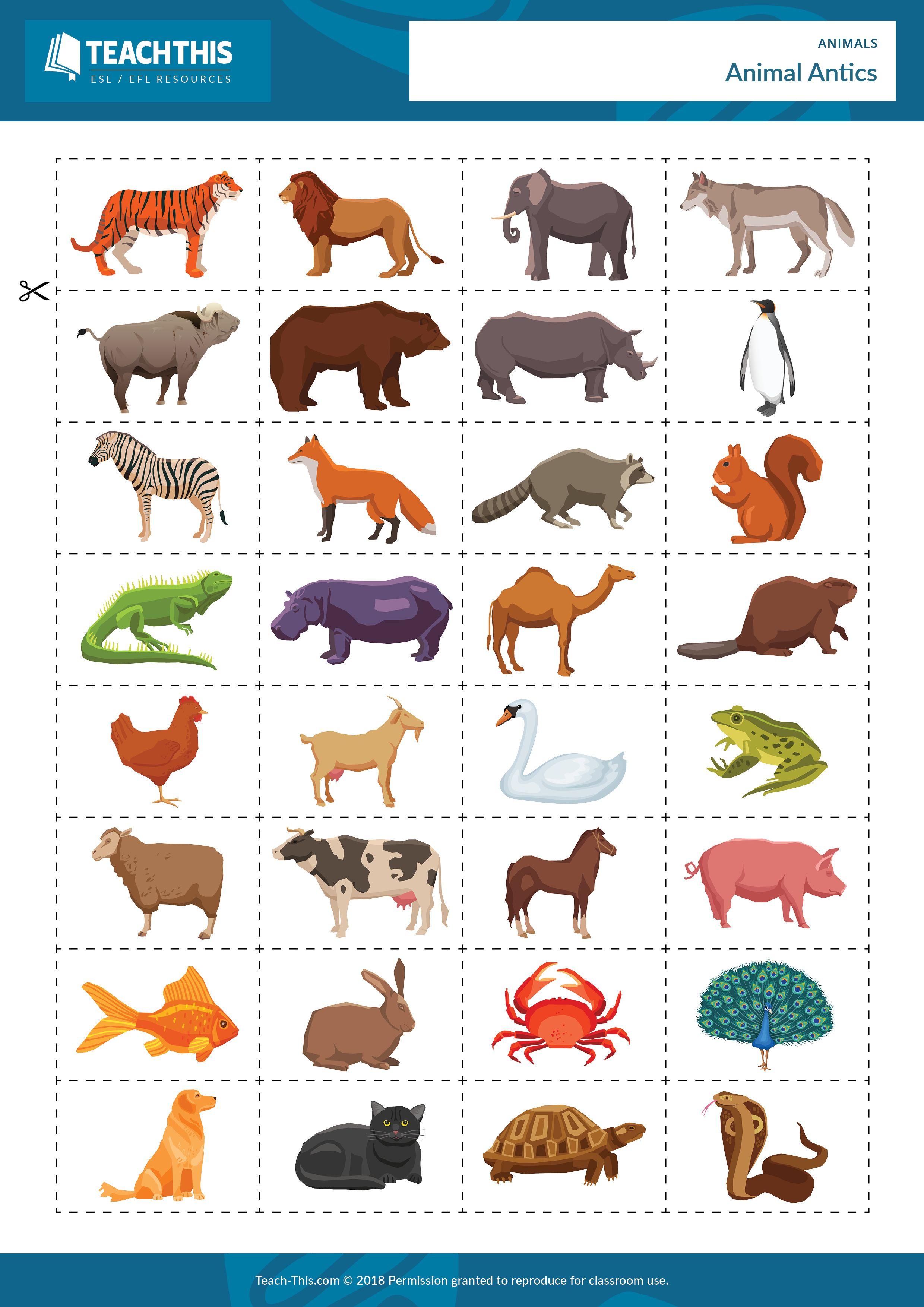 Animals Ingles