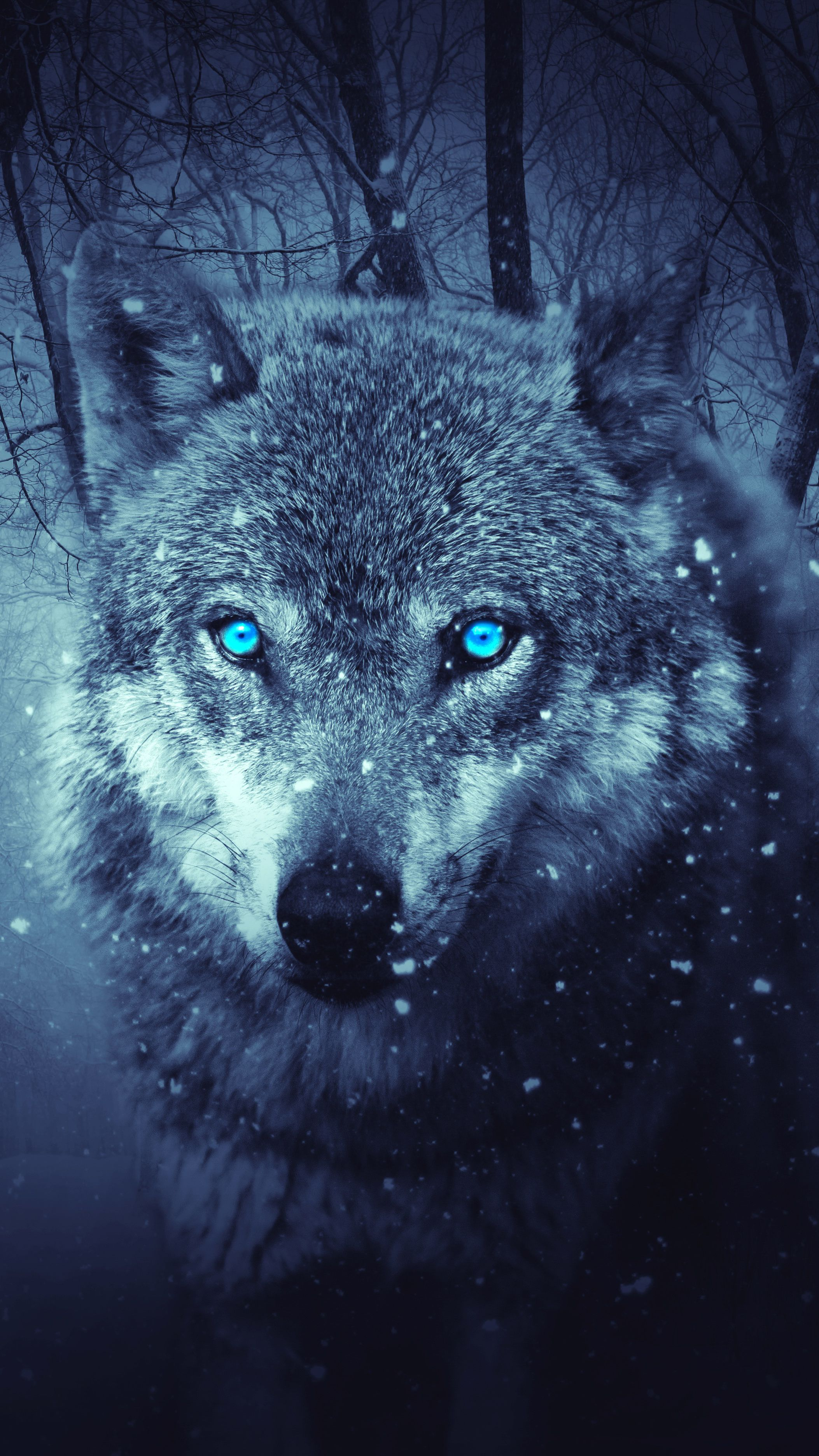 Wolf Colorful Mobile Hd Wallpaper Wolf Wallpaper Wolf With Blue Eyes Hd Wallpaper