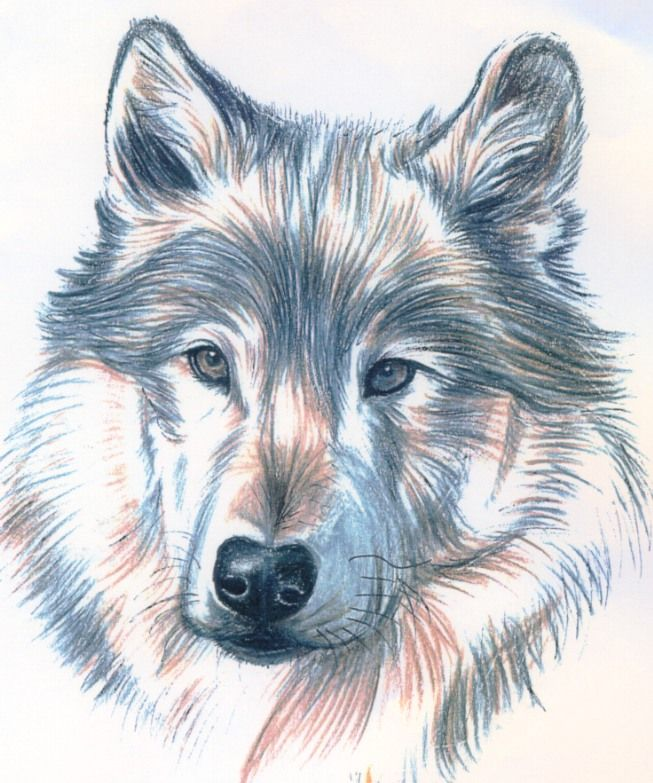 Wolf Tattoos 1137.jpg Full Size Images | Tattoo Advisor