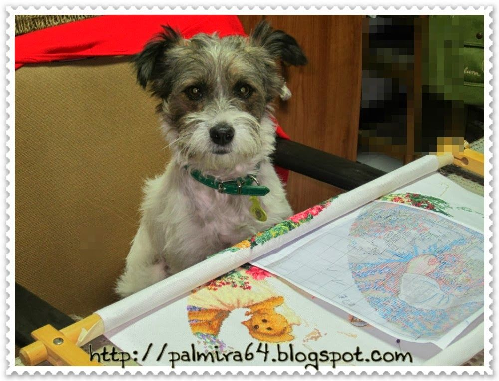afternoon tea dimensions | Angel, Mascotas y disfraces | Pinterest ...
