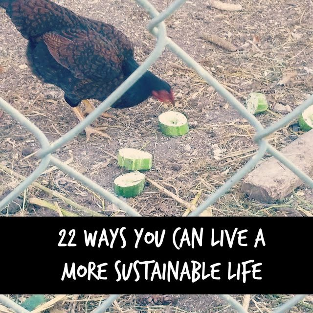 Living Life in Rural Iowa: 22 Ways You Can Live A More Sustainable Life