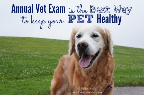 Importance Of Annual Vet Exam For Your Pet Golden Woofs Pet Health Care Healthy Pets Pet Care Tips