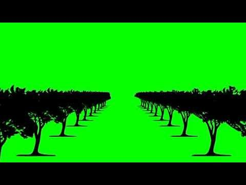 Green Screen Background Trees Effects Video Youtube Green Screen Video Backgrounds Greenscreen Green Screen Backgrounds