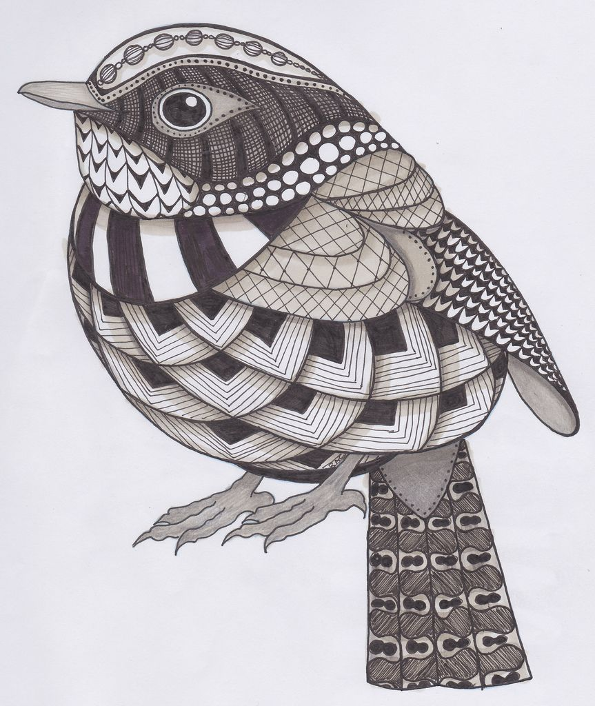bird zentangle with color Google Search (With images