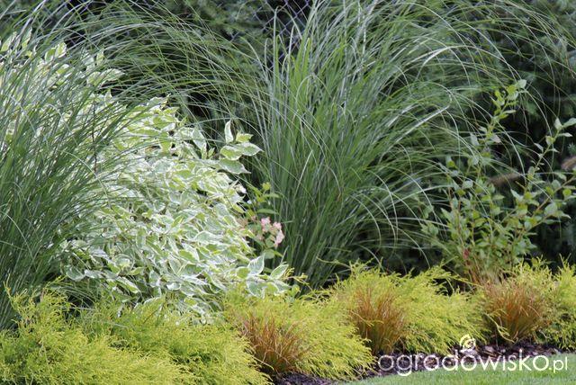 Rosliny Na Bardzo Nasloneczniona Strone Domu Ornamental Grasses Plants Garden