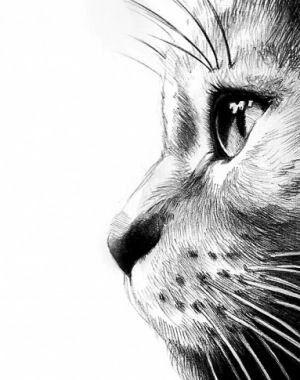 Deseo Dibujar Así Que Bonito Croquis De Chat