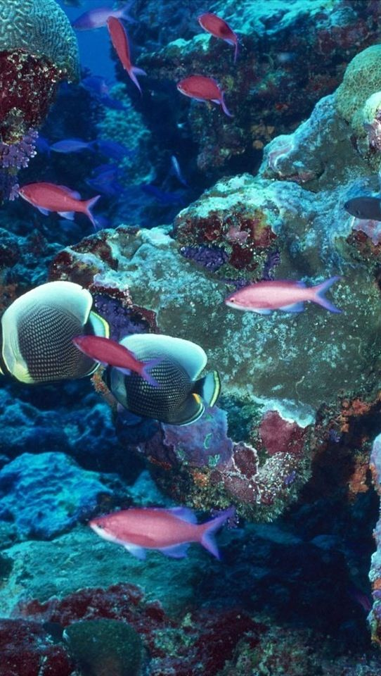 Life under the sea!