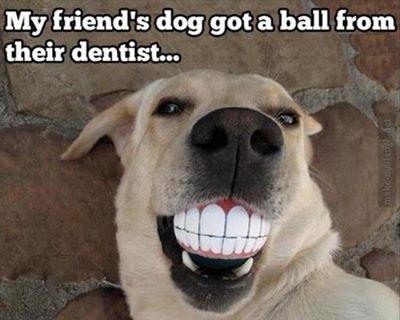 My friend's dog got a ball from their dentist….