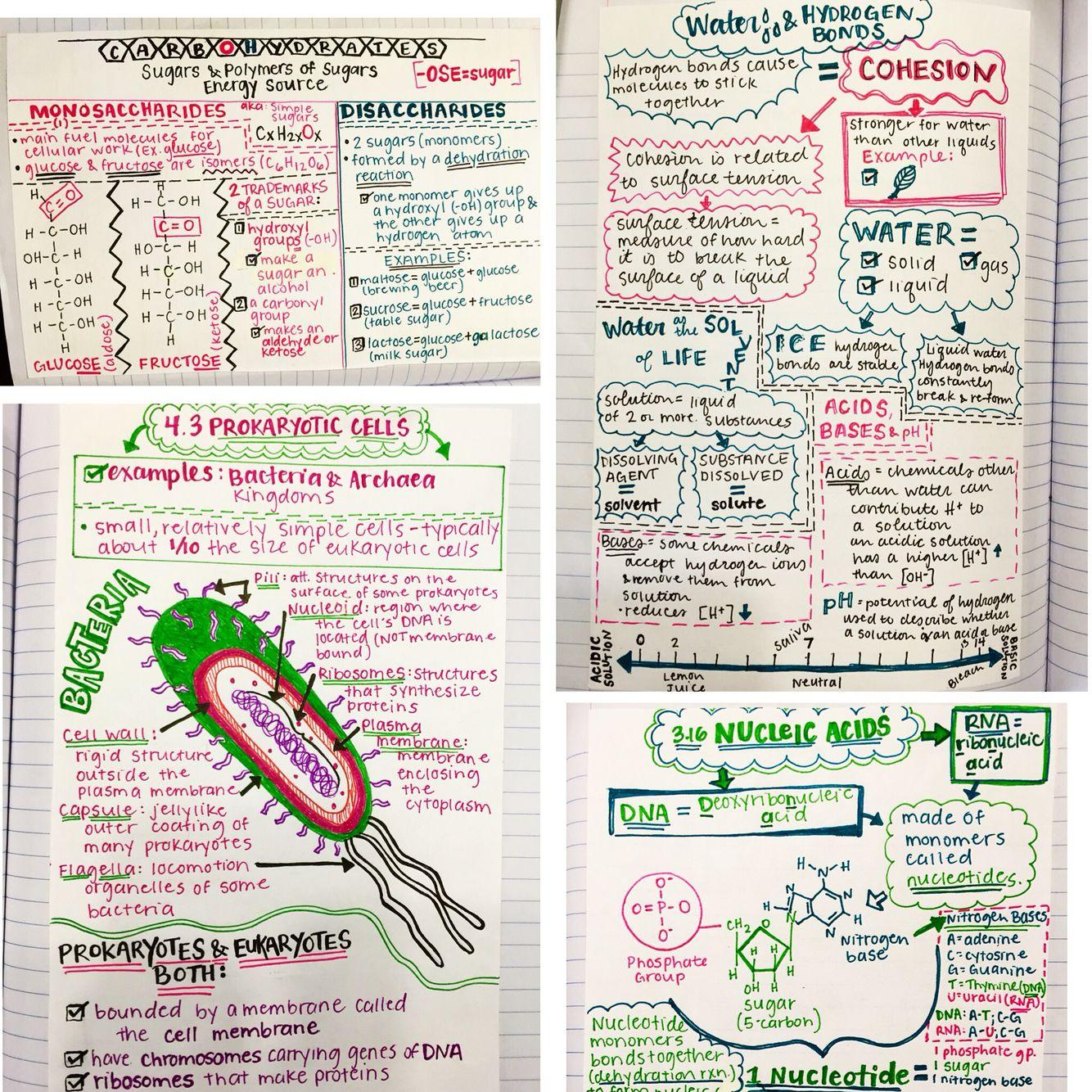 Sketchnotes For Biology Ii